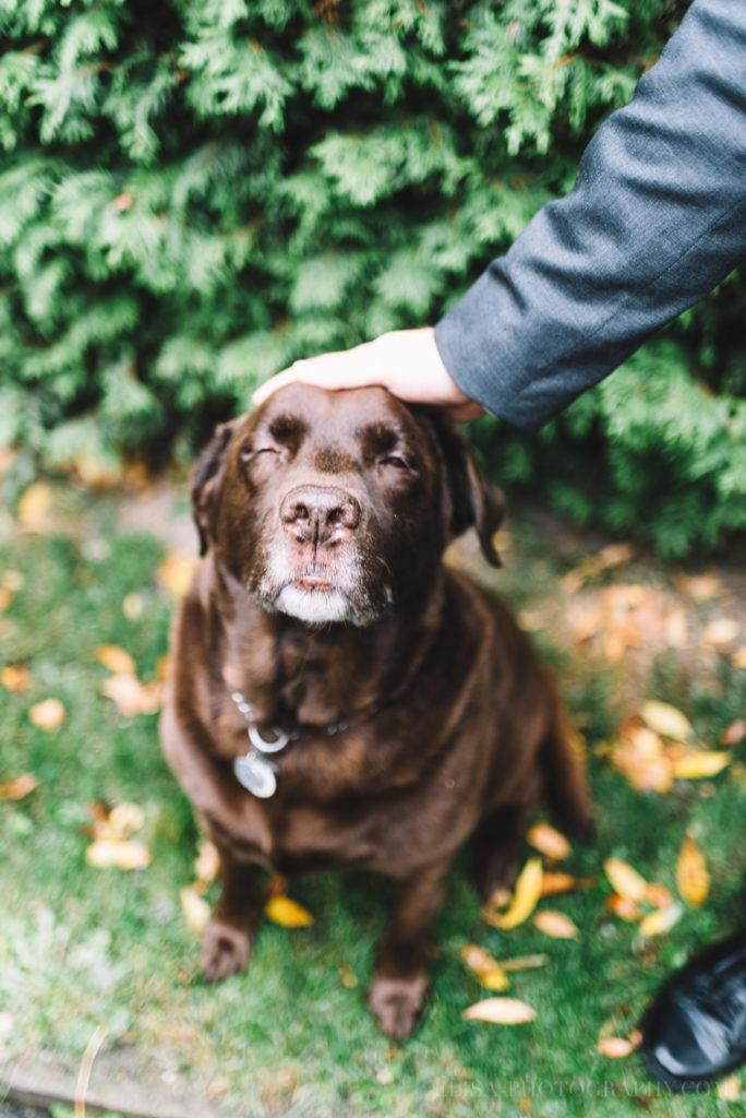 mariage-quebec-baie-de-beauport-automne-mere-marie-chien-labrador-photo-9029