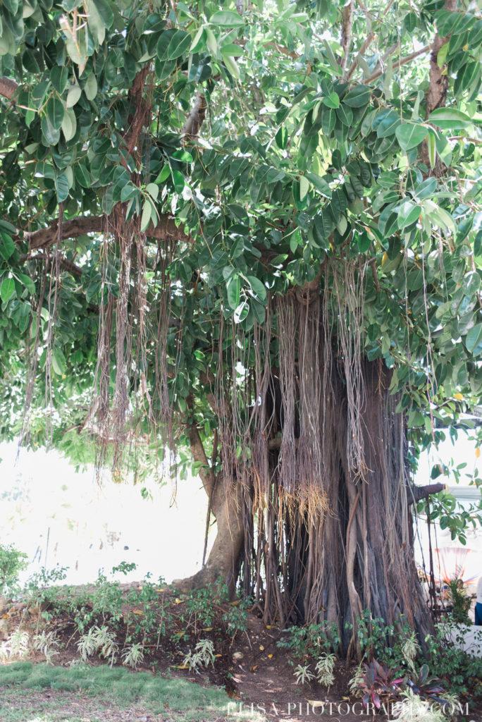 mariage de rêve à destination arbre lianes mer des caraïbes grand bahia principe jamaïque photo 6409 684x1024 - Un mariage de rêve à destination de la Jamaïque: Mindy & Mathieu