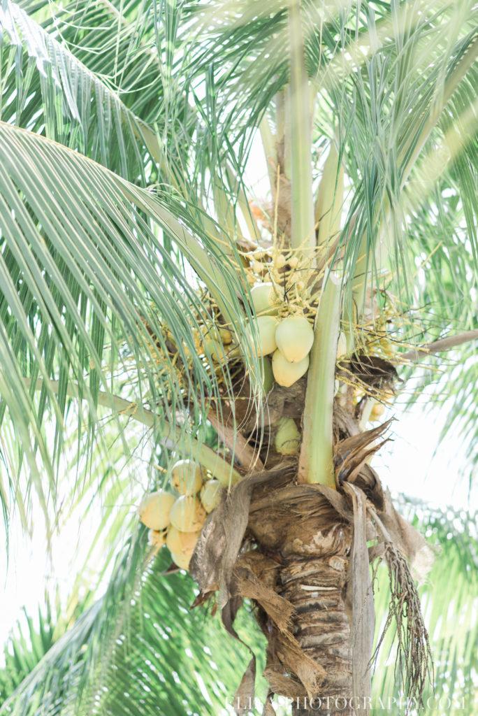 mariage de rêve à destination palmier noix de coco caraïbes grand bahia principe jamaïque photo 6452 684x1024 - Un mariage de rêve à destination de la Jamaïque: Mindy & Mathieu