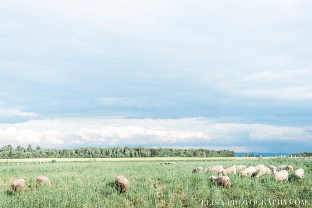 mariage champs moutons rustique le germain charlevoix photo 9622 1024x684 - Mariage en toute élégance à l'hôtel Le Germain de Charlevoix: Véronique & Eric
